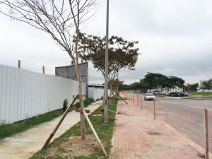 Árvore (1)