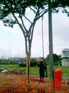 Árvore (2)